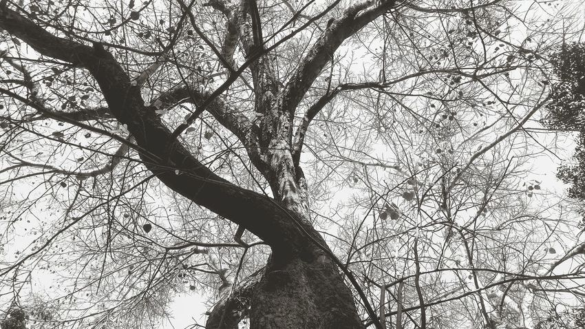 Low Angle View Branch Tree Sky Nature Backgrounds Day Outdoors Growth Beauty In Nature EyeEmNewHere Spotted Like4like No People NewEyeEmPhotographer NewHere ✌🏽️😄 Pattern Graphics Close-up Blackandwhite Black Love Welcome To Black