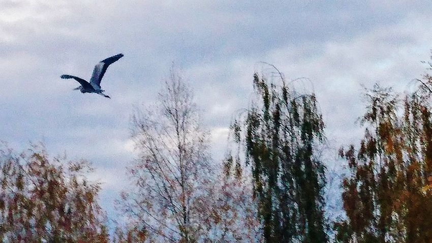 Flying Bird Animals In The Wild Animal Wildlife Animal Themes Sky Low Angle View One Animal Spread Wings Mid-air Cloud - Sky Nature Outdoors Day Bird Of Prey Tree Motion Flock Of Birds Vulture Beauty In Nature