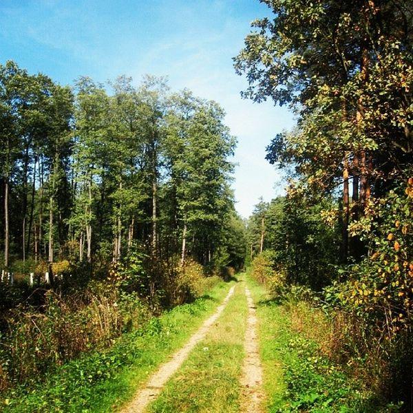 2007 Poland Pologne Polen poloniapolskapidkarpacielancutczarnaforestnaturelastreestreelandscapeeuropeeuropa