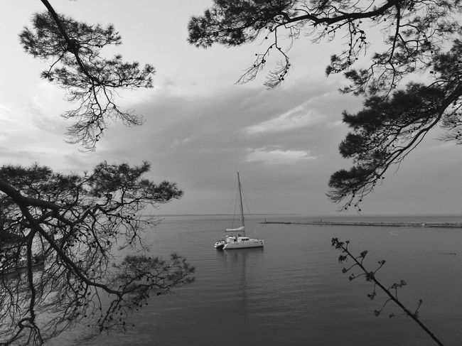 Surrounded @ Rovenska, Veli Losinj, Croatia, 2016. Rovenska Veli Lošinj Losinj Croatia Yacht Boat Katamaran Sailing Bay Pine Tree Trees Silhouette Calm Peaceful Copy Space Tranquil Sea Seascape Landscape Wilderness Nature Black And White Adriatic Sea Mediterranean