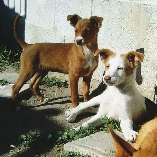 Perros  Dogs Animals Pets