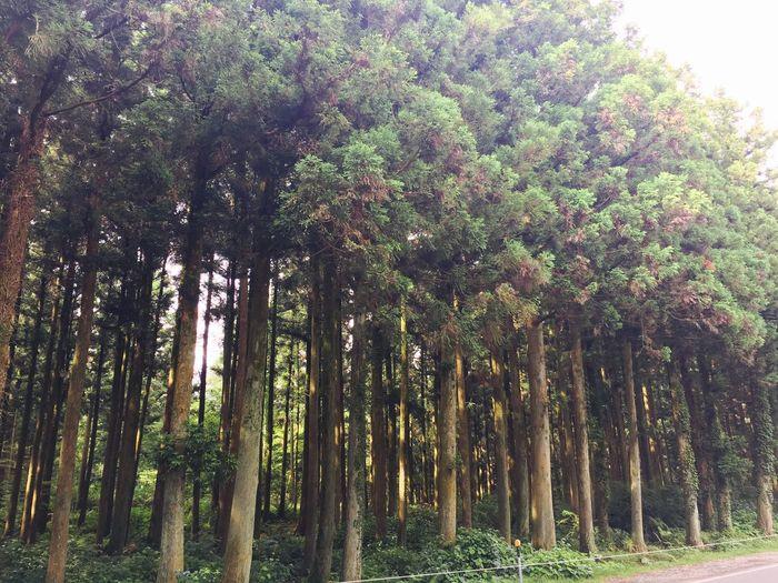 샤러니숲길