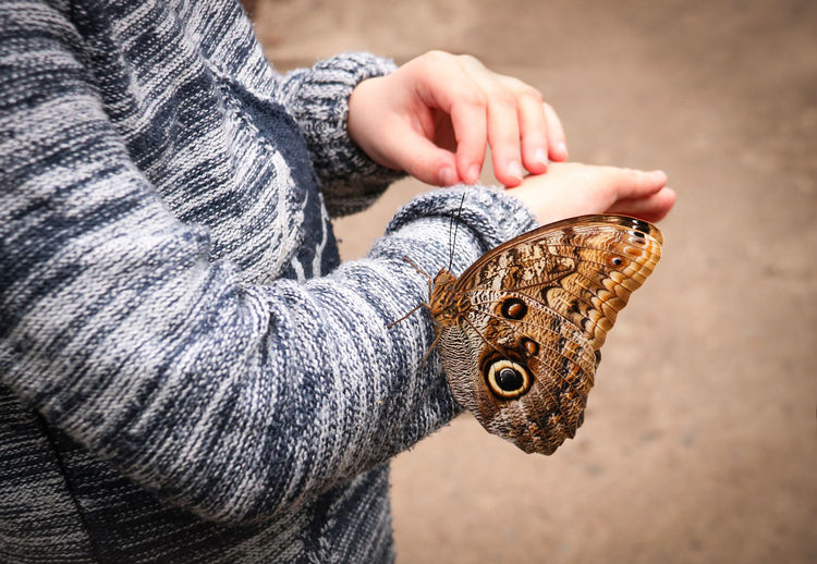 Midsection of kid holding moth