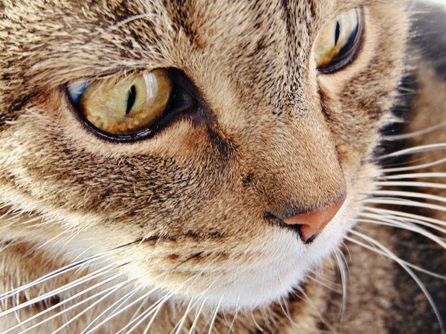 пупсик няша😺 усатик котэ Котик кот