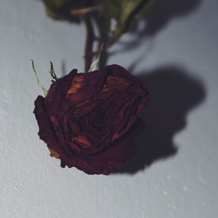 Still life. Old rose from Velentine's day. Enjoy the love! Amor Nature Nature_collection Nature_perfection Old Old Rose Roses Rose🌹 Valentine Gift Still Life Valentine Presents Focus