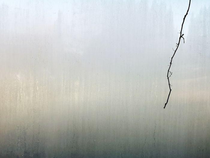 Full frame shot of wet tree in lake