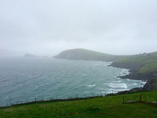 pick me. choose me. love me. Ireland Wildatlanticway Nature Daringgreatly Grey's Anatomy Tadaa Community Fucklove