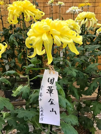 Ye l l o ee Flower Plant Flowering Plant Yellow Text Beauty In Nature Fragility Flower Head Close-up Day Nature Freshness Inflorescence Vulnerability  Western Script Communication Growth Petal