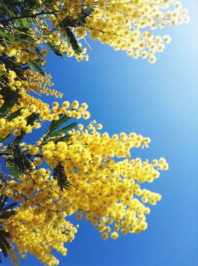 EyeEm Nature Lover Yellow Blue Sky Nature Flowers,Plants & Garden Hello World Relaxing