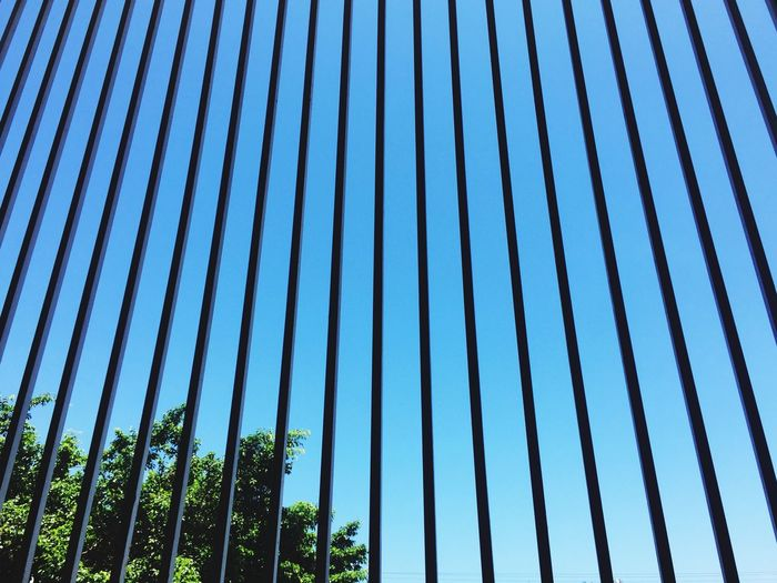 Low angle view of metal grate and tree against clear blue sky