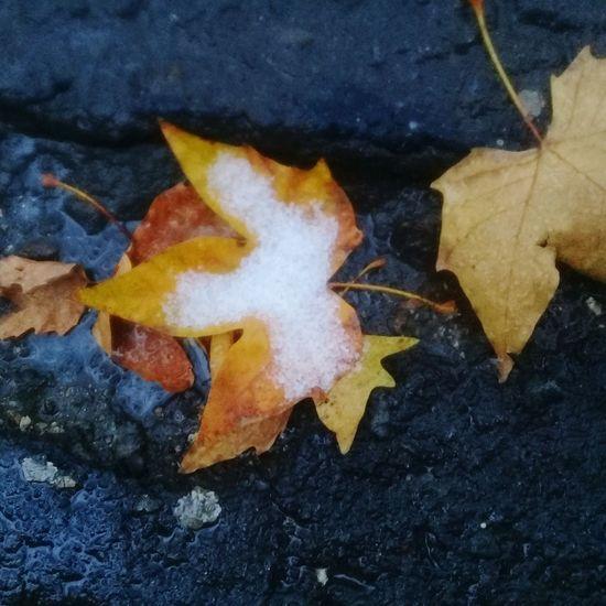 листики листопад асфальт Снежок  прогулка холодно