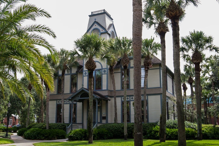 DeLand Florida Architecture Building Building Exterior Built Structure Day Growth Nature No People Outdoors Palm Tree Plant Sky Stetson University Tree Tropical Climate