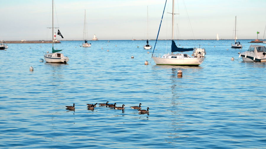 Animal Wildlife Beauty In Nature Bird Boats Day Duck Family Ducks Ducks In The Lake Lake Michigan Nature Nautical Vessel No People Outdoors Sailboat Sailing Ship Sea Water Yachting