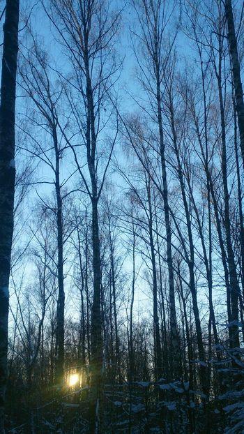 Утро в лесу. деревья утро Лес Природа Trees Morning Forest Nature Sky небо No People Beauty In Nature