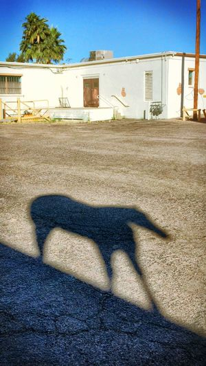 I feel like I'm being followed.... Showing Why I Could Be An Open Editor AMPt_community Streamzoofamily There Be Dragons Tadaa Community OpenEdit Urban Geometry Horse Check This Out Light And Shadow