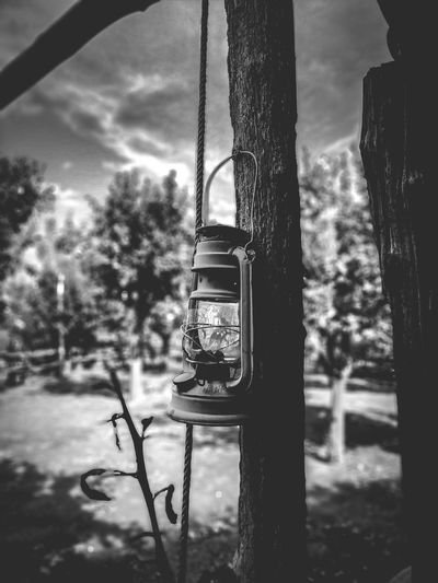 Old light Sorrento Bw Bw Photography BW Transcience Bw Lover Past Time Light Old Light Old Nature Day Plant Hanging Sunlight Lighting Equipment