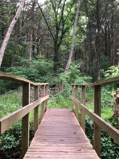 Wooden footbridge amidst trees in forest