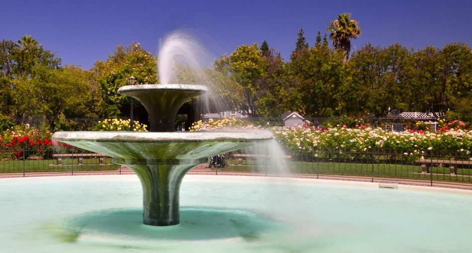 Wind blowing water out of the central fountain at the rose garden.