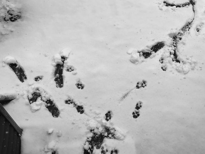 High angle view of sheep on snow