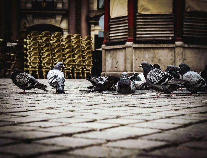 Pigeons perching on floor