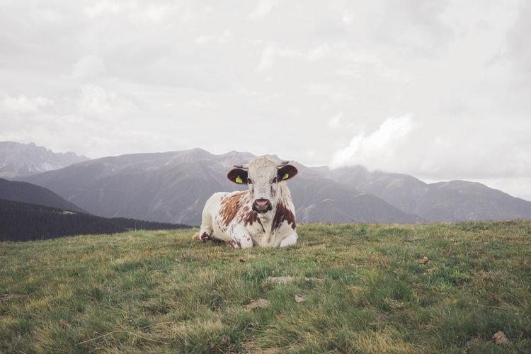 Horse on grassy field against mountain range