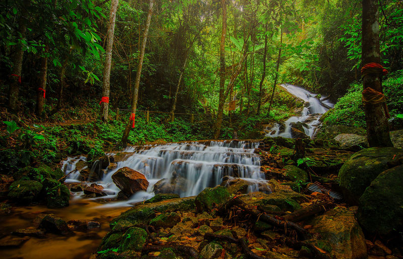 Waterfall at forest