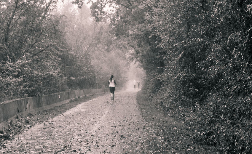 Rear View Of Woman Jogging On Footpath Amidst Trees During Foggy Weather