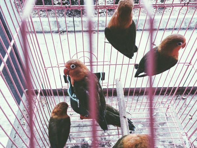 Animal Themes Wildlife Bird Animals In The Wild Cage Zoology Pets Birdcage Two Animals Selective Focus Animals In Captivity Parrot Three Animals Close-up Trapped Domestic Animals Perching Mammal Animal Beak