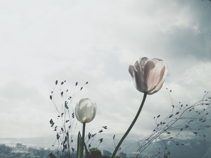 VSCO Vscofilm Flowers Sky Vscocam Minimal Plants Dry 365project Still Life (day1)