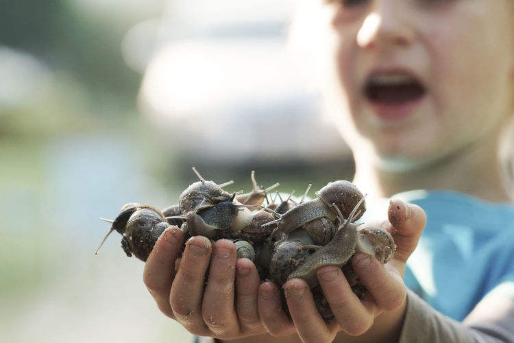 Close-up of boy holding crab