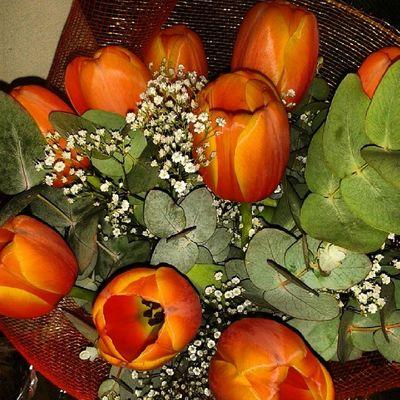 Tulipani Meravigliosi Regalo Amore sorpresasonounadonnafeliceprofumo