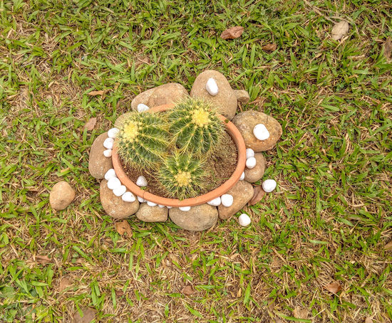 Home Decoration Barrel Cactus Barrel Cactus Decorative Stones Pebbles Pot Decoration Stone Pebbles White Decorative Stones Barrel Cactus Flower Basket Beauty In Nature Close-up Day Field Freshness Grass Growth High Angle View Nature No People Outdoors Plant Stones