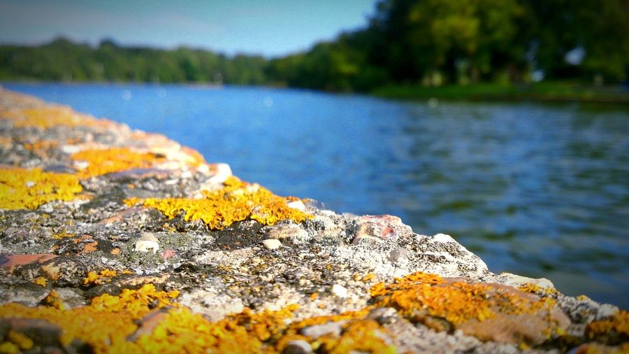 Close-Up Of Yellow Moss Growing On Rock At Riverbank