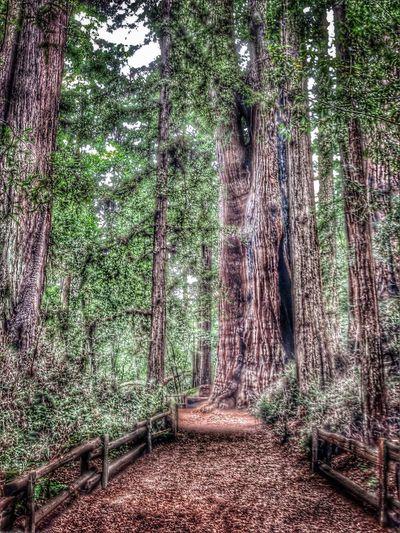 EyeEm Best Edits Tree California Redwoods EyeEm Best Shots - Nature