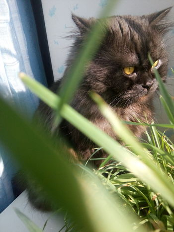 Close-up Plant No People Cat Whisker Outdoors Domestic Cat Fresh On Eyeem  Fresh On The EyeEm One Animal Window Focus On Foreground Animal Pets Looking Animal Nose Looking Away Selective Focus Front View Domestic Animals Кот Тима Pet Portraits