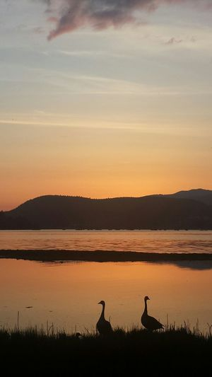 Amazing sunset tonight! Nofilter#noedit Nofilter EyeEm Nature Lover Sunset_collection