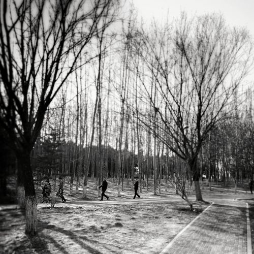 1970s of China B & W  Athletic Olympic Park  Weekend Activities Nostalgic  B&W Street Photograpghy Beijinglife Lookingup Tree Bare Tree Branch Sport Sky