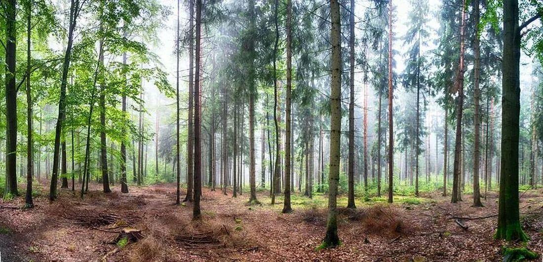 Greiz Taking Photos Forest Nature