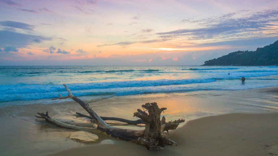 aerial photography The big dead tree was shattered by the waves on Karon beach. Beach Beauty In Nature Cloud - Sky Driftwood Horizon Horizon Over Water Idyllic Land Nature Orange Color Sand Scenics - Nature Sea Sky Sunset Tranquil Scene Tranquility Water Wave