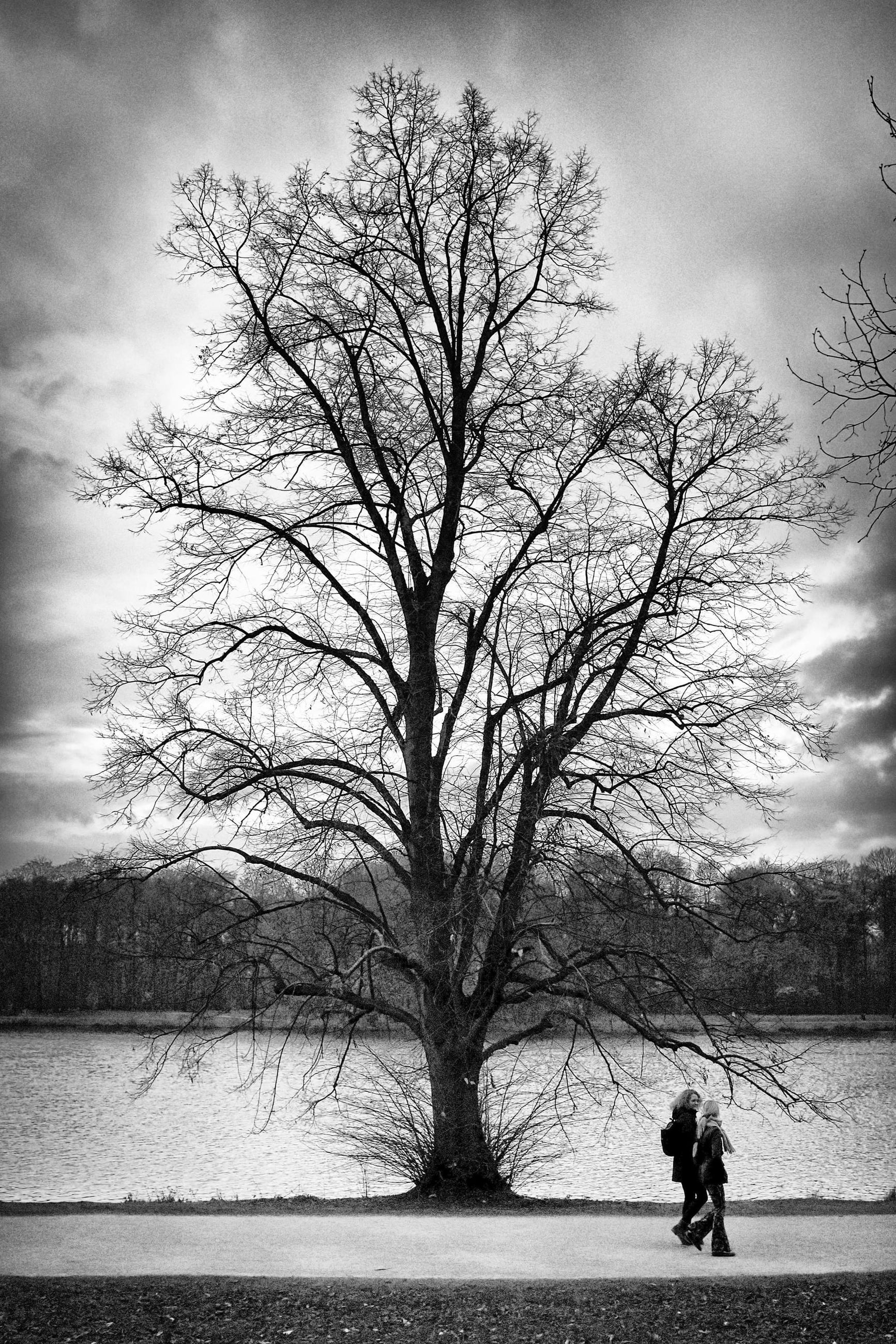 tree, bare tree, black and white, plant, sky, nature, monochrome, monochrome photography, cloud, branch, one person, morning, silhouette, water, men, beauty in nature, winter, full length, outdoors, leisure activity, lifestyles, day, tranquility, scenics - nature, black, land, adult, darkness, lake, tranquil scene, environment, rear view, walking, transportation, tree trunk, trunk