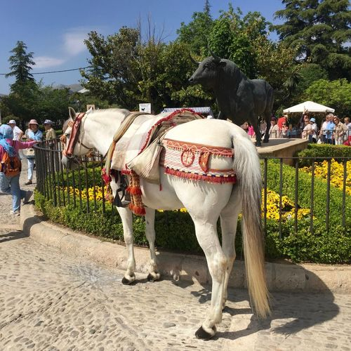"City life with an rural country ""taste"". Beautiful spanish horses to enjoy a ride... Buildingstyles Bull Statue Carriage Ride City Life Day Flowers Garden Horses Man And Girl Outdoors People Sky Spanish Horses The Mix Up Travel Destinations Urban Lifestyle In Ronda Animal Themes"
