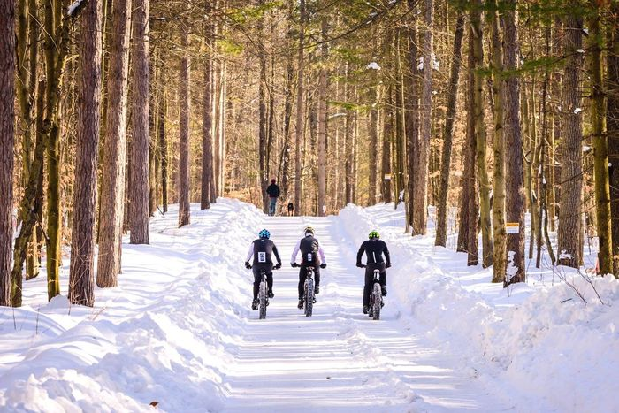 Snow Winter Cold Temperature Tree Forest People The Way Forward Scenics Landscape Fat Bike Winter Sport Forest Photography Forestwalk Beauty In Nature Walk The Dog Relaxing Outdoors Young Adult Nature Day Adults Only