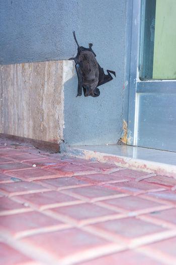 Bat - Animal Bat Aera Bat Cave Bat Eared Fox Bat House Bat Yam Sleeping Sleeping Bats Sleeping Time