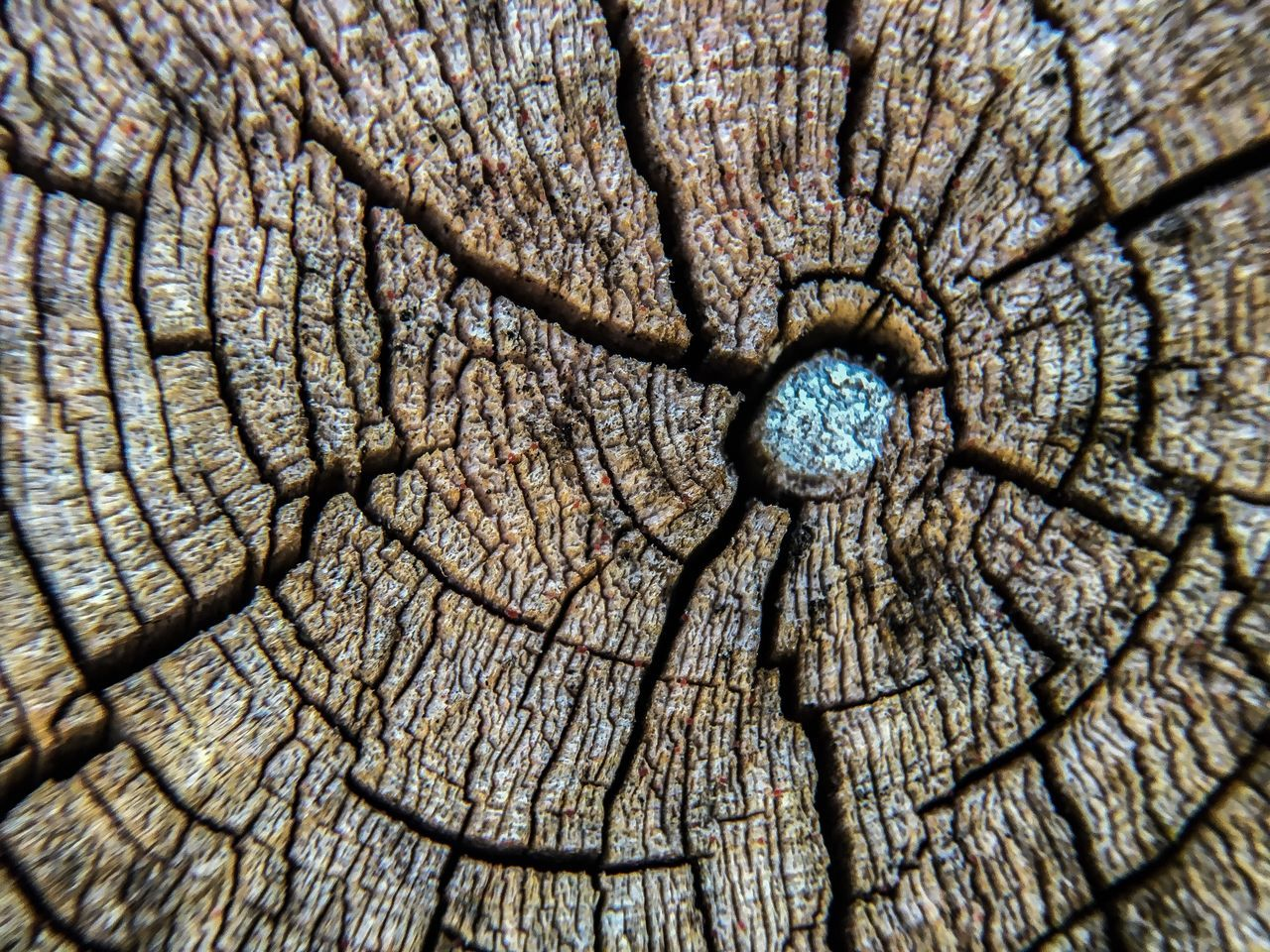 full frame, backgrounds, textured, tree ring, no people, close-up, concentric, nature, day, growth, outdoors, tree
