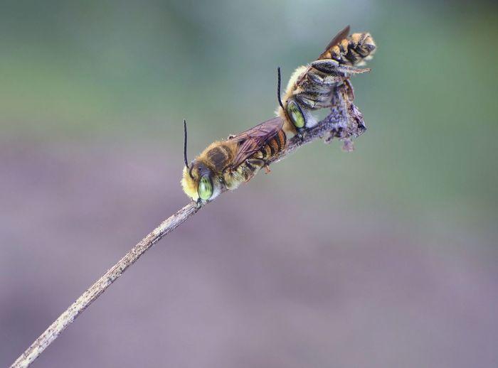 Bee teken :