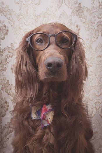 Dog Irishsetter Portrait First Eyeem Photo Vintage