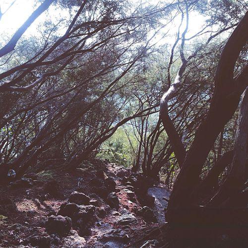 Bukit Tabur Projekselipar Picoiphone Igersxnogori Kolumpur_igers Ikutcarakita ProjekWaghih Bukit Bukittabur HuluKlang