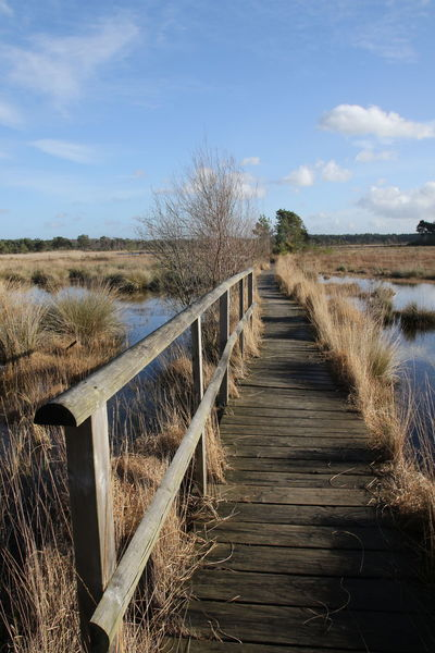 Peace Thursley Common Bright Day Open Air Outdoors Outdoors, Outside, Open-air, Air, Fresh, Fresh Air, Surrey Countryside Trainquil Walkway
