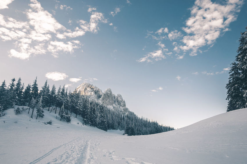Beauty In Nature Cloud - Sky Cold Temperature Coniferous Tree Covering Environment Land Landscape Nature No People Non-urban Scene Outdoors Pine Tree Plant Scenics - Nature Sky Snow Snowcapped Mountain Tranquil Scene Tranquility Tree White Color Winter