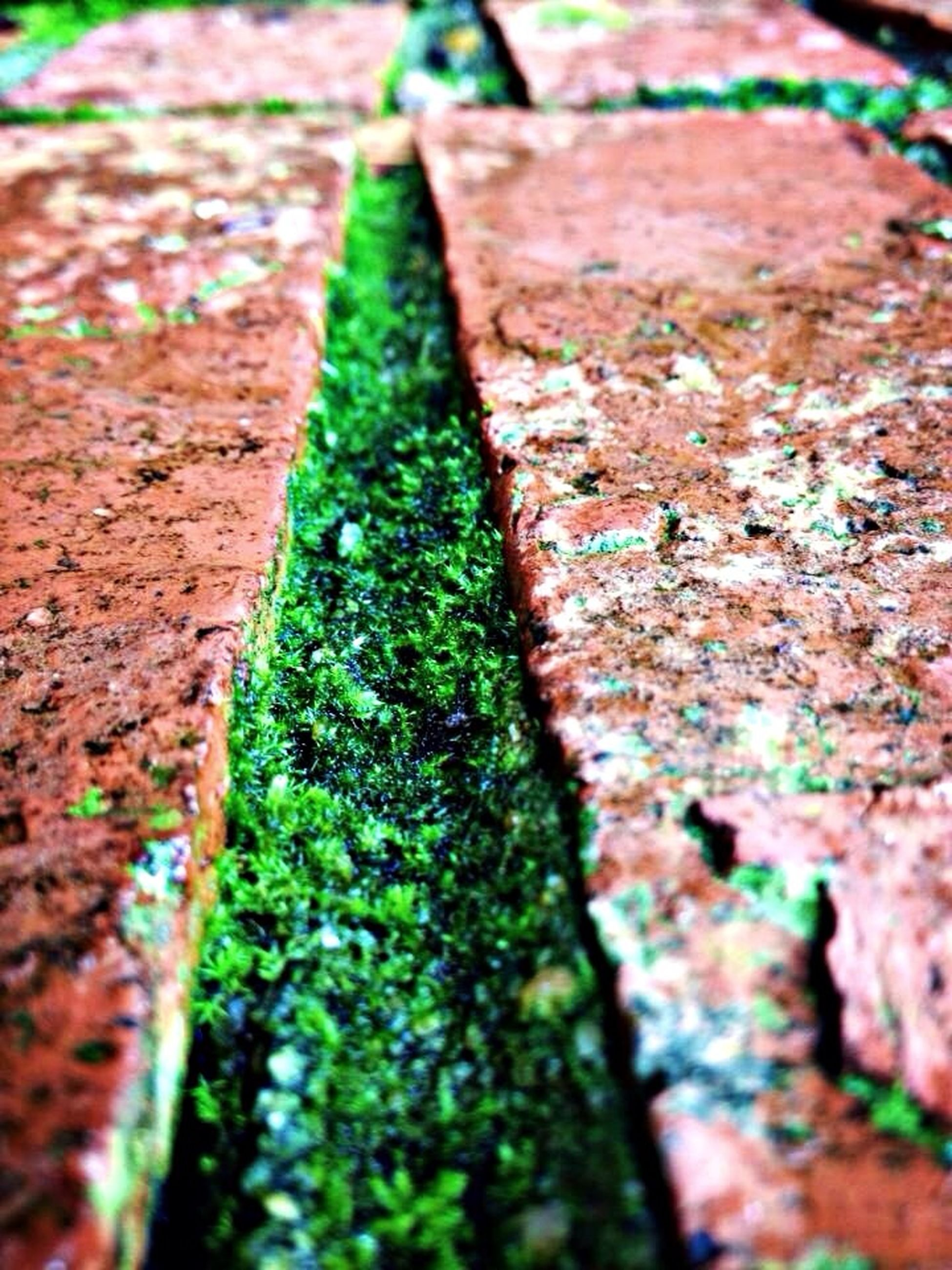 moss, selective focus, textured, close-up, green color, growth, rough, leaf, nature, tree, focus on foreground, day, outdoors, plant, tree trunk, no people, weathered, high angle view, wood - material, wall - building feature